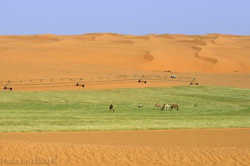 Desert life by TARIQ-M