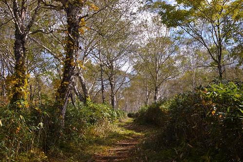 Ukishima Wetlands 浮島湿原 2016 Autumn