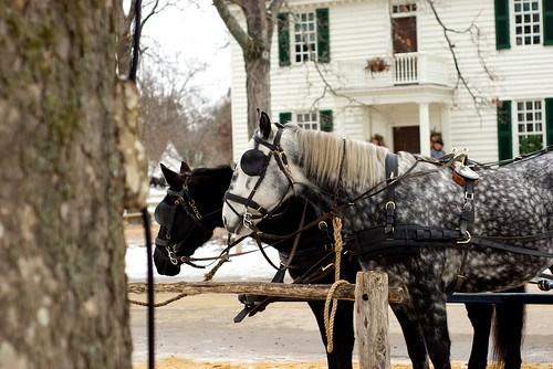 Williamsburg Horses