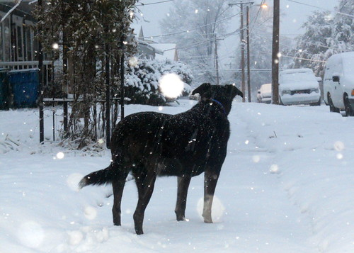 Post-Christmas Snow in Durham - Herman takes a look around (3)