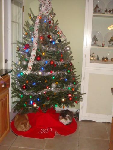Oh (REAL!) Christmas Tree