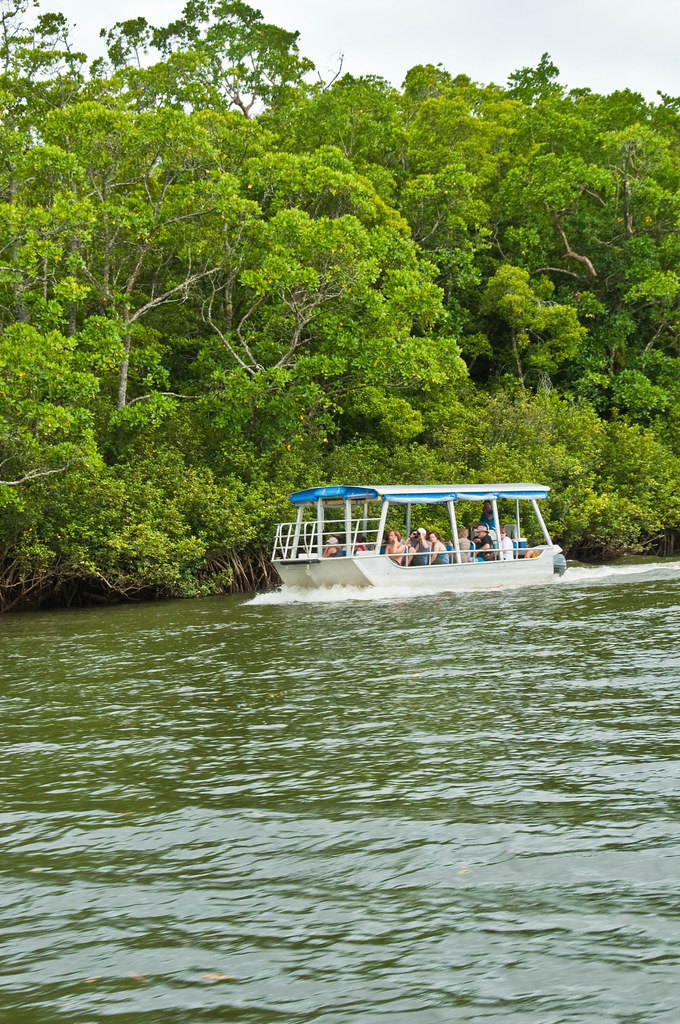A tourist boat on the Daintree River