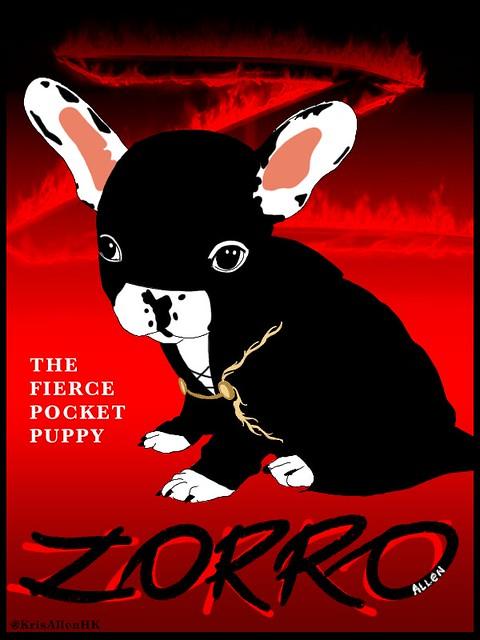 Kris Allen's puppy French Bulldog Zorro Allen