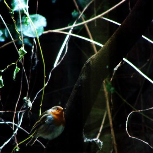 Birdie [Day 332/365]