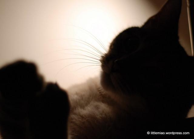 chun whisker shadows