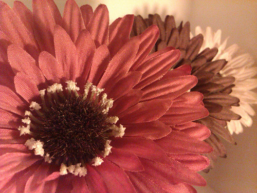 Fake flowers {003/365}