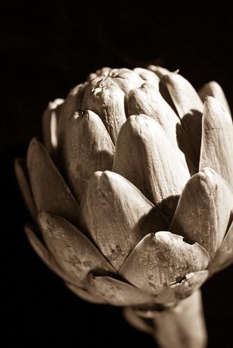 artichoke #3