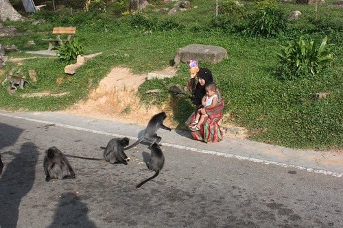 201102180814_silver-leaf-monkey