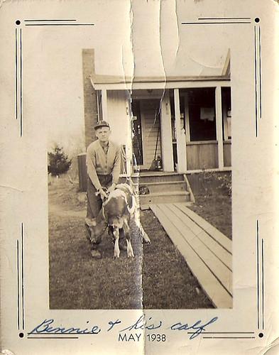 Ben, Calf May 1938