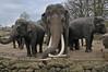 Asiatische Elefanten im Dierenpark Emmen im April 2010