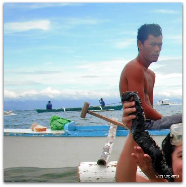 Sea cucumber, Balicasag Island