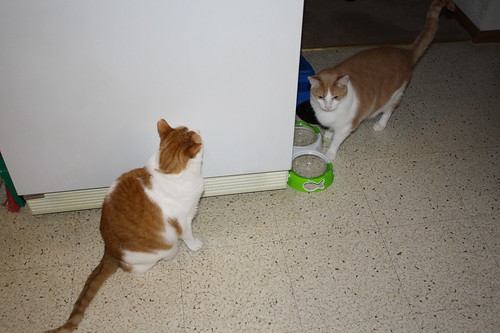 cats waiting for food