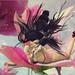 Cao~Fairy's sleep AD lingerie March