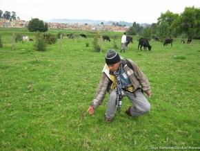 Ganaderia vs Arborización; humedal Tibabuyes