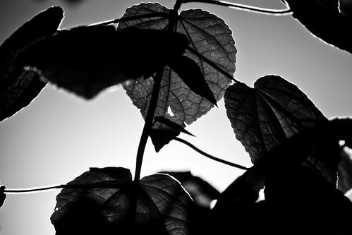 veins by Matt Hovey