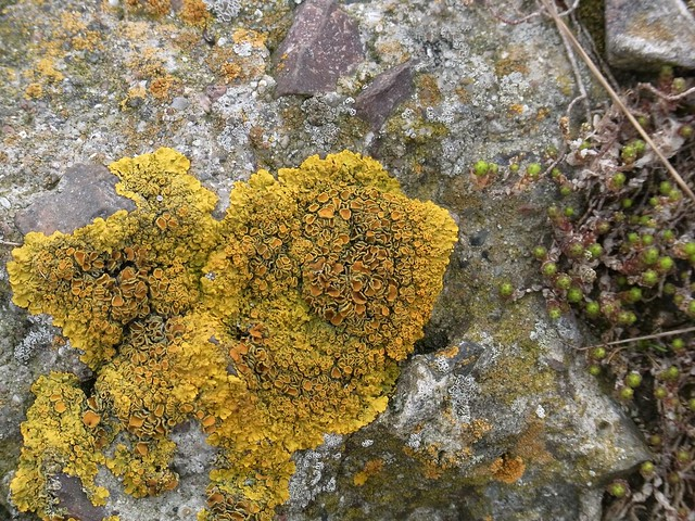 Lichen and heather