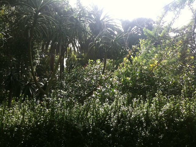 Rancho Los Alamitos garden