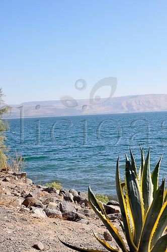 Capernaum (1 of 1)-9