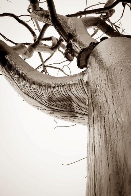 11x14 ice on metal tree 2 sepia