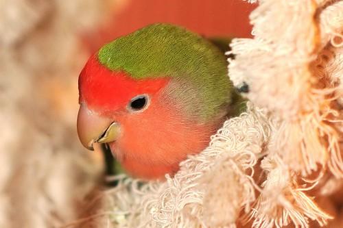 nesting lovie