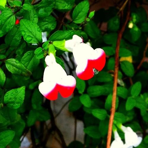 お散歩中に見かけたお花。なんて名前なんだろ? #flower