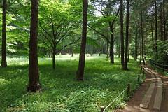 泉の森―森のはらっぱ(Field, Izuminomori park, Yamato, Kanagawa, Japan)