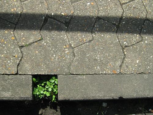 kerb greens