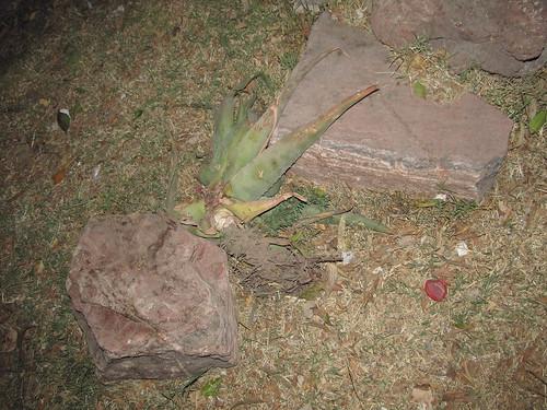 Macabro Hallazgo 3: Savila abandonada en camellon