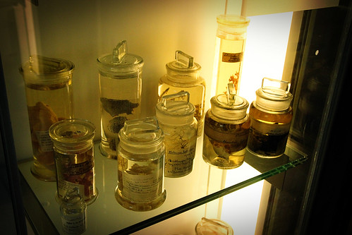Spirit-jars-Natural-History-Museum