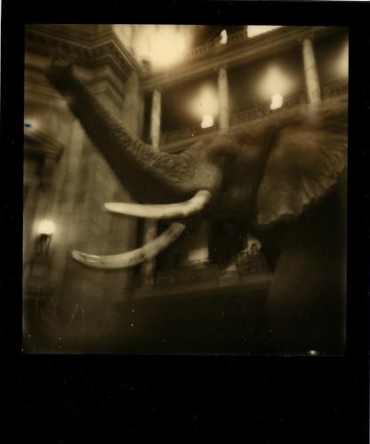 NMNH Elephant