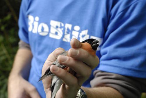 Bird Finch