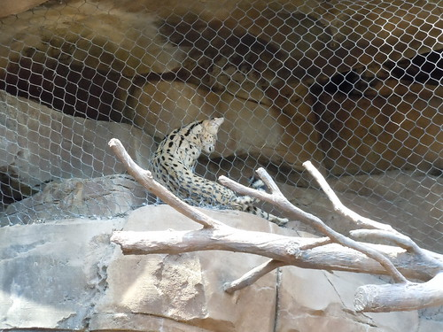 Omaha's Henry Doorly Zoo