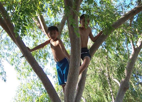 monkey boys