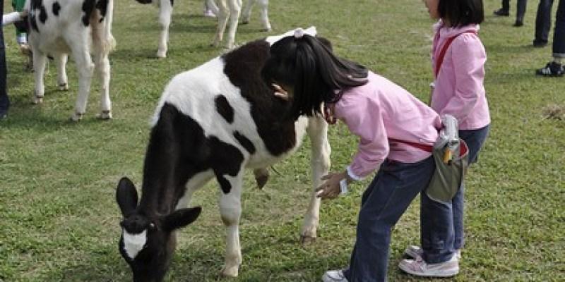 嘉義綠盈牧場:和小牛好親近、賽鵝(6.7ys)