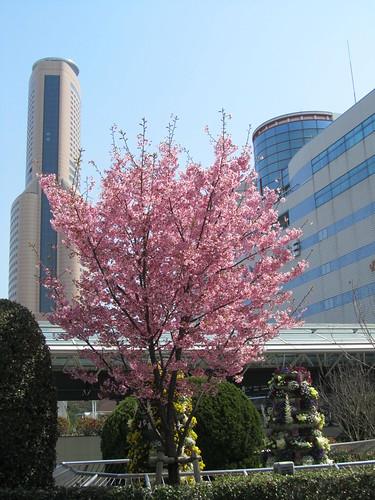 Spring in Hamamatsu