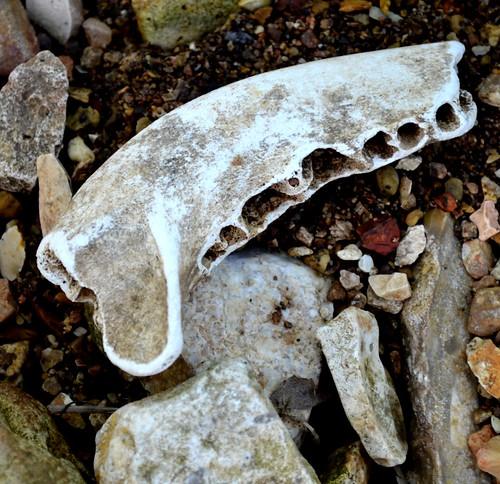 a random jaw bone 2