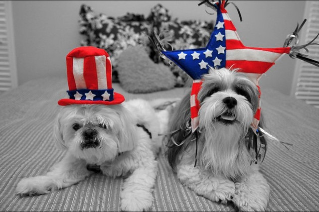 Party like it's the 4th of July!