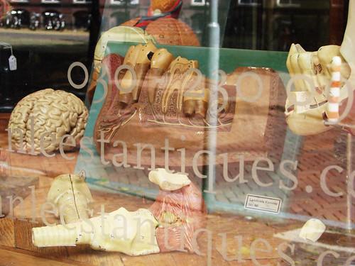 Anatomy Antiques