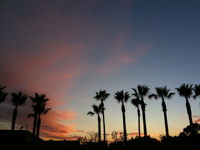 Sunset, palms and the moon