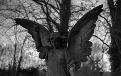 Fujica Angel