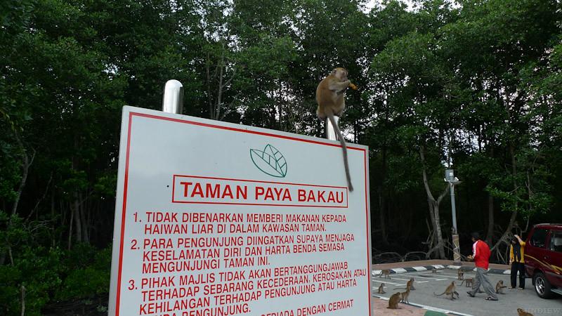 Taman Paya Bakau - 29