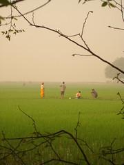West Bengal landscape