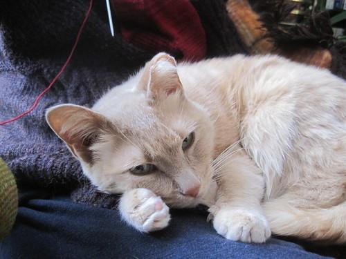 Dec25-Cat1
