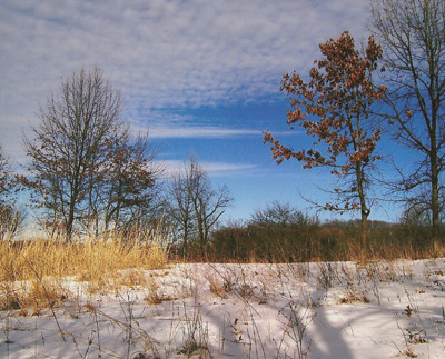 20101211_winter_grasses_photo