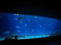 夜探海生館:大洋池