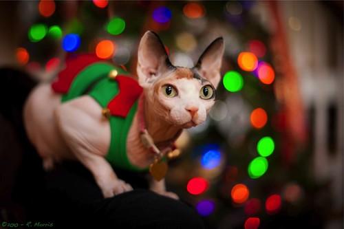 """Skinny says, """"Merry Christmas!"""""""