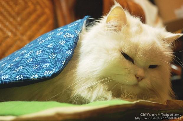 [Cat]叮叮。寒冬好眠02.jpg