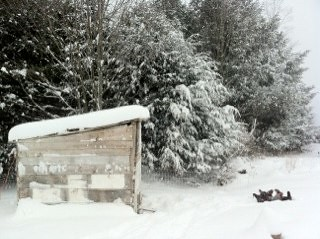 Snowy chicken coop