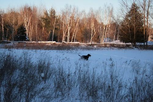 snowy meadow with dog