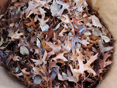 bag o' leaves